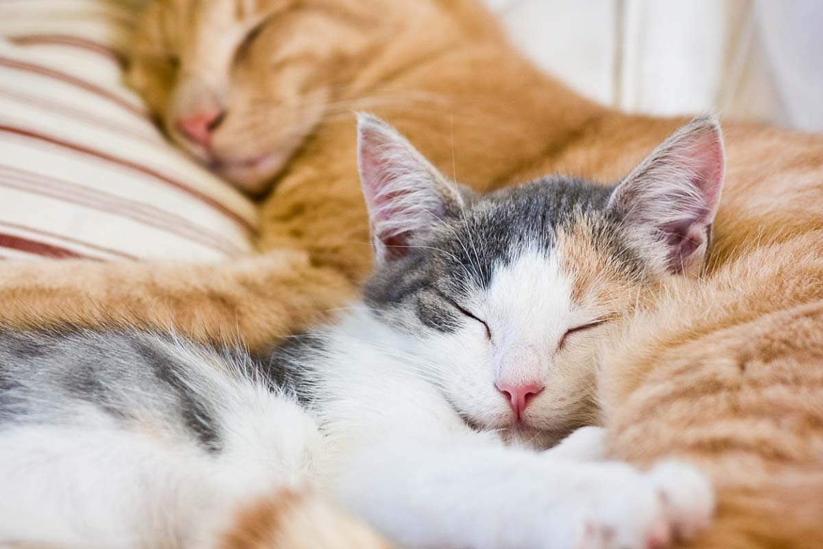 two cats asleep how long do cats sleep