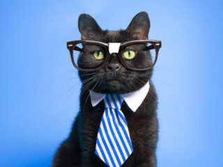 black cat wearing glasses and a tie
