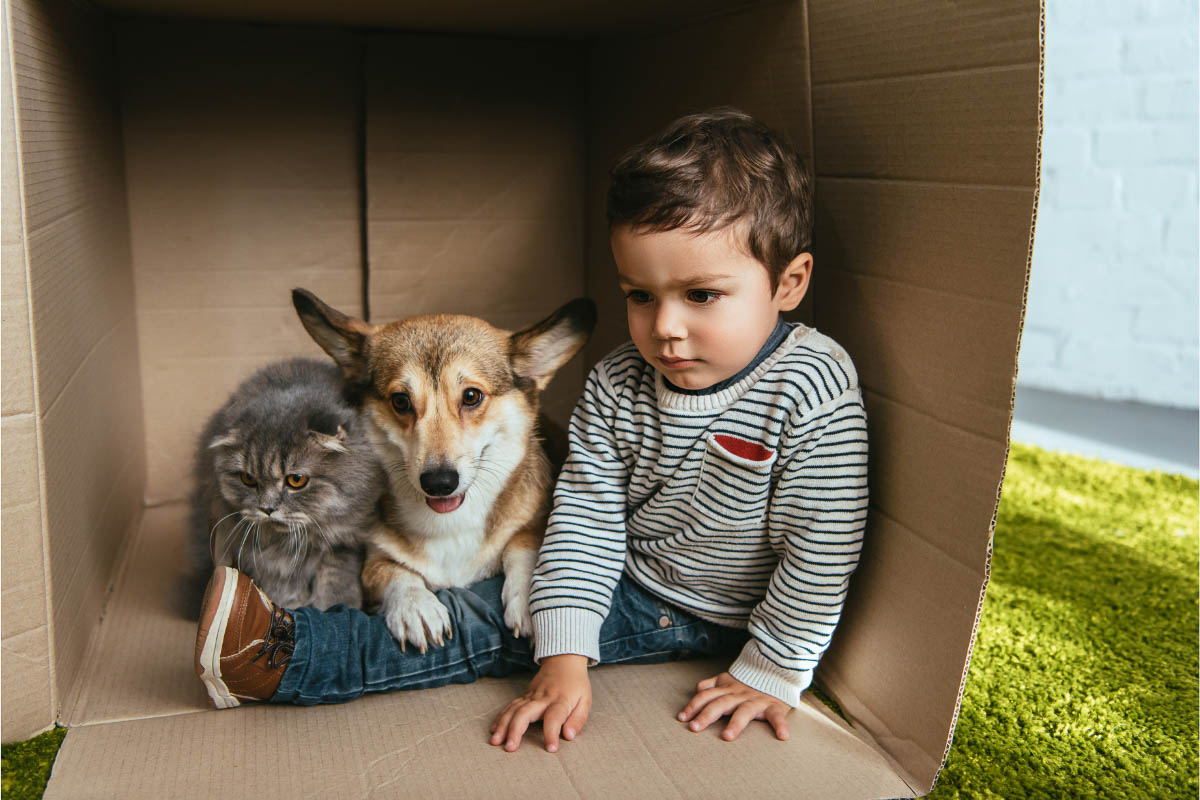 corgi cat and kid in a cardboard box