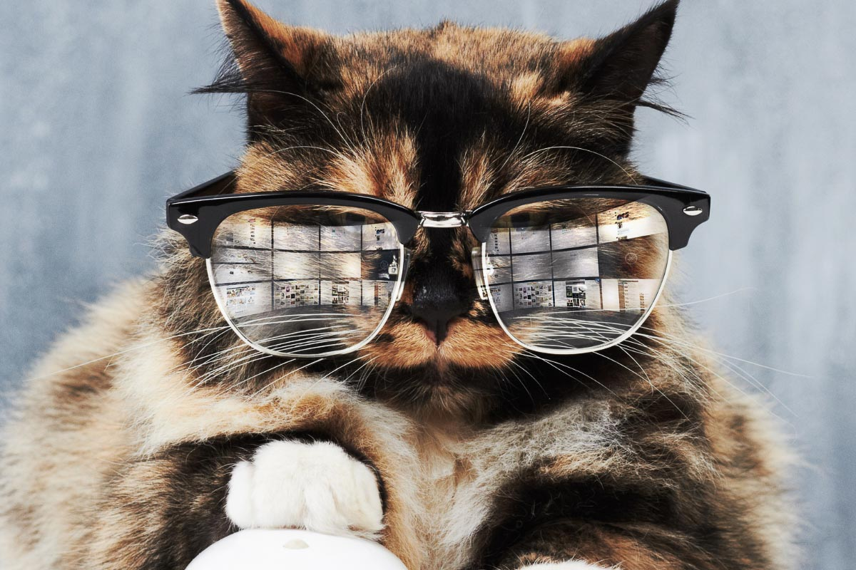 tabby cat wearing glasses