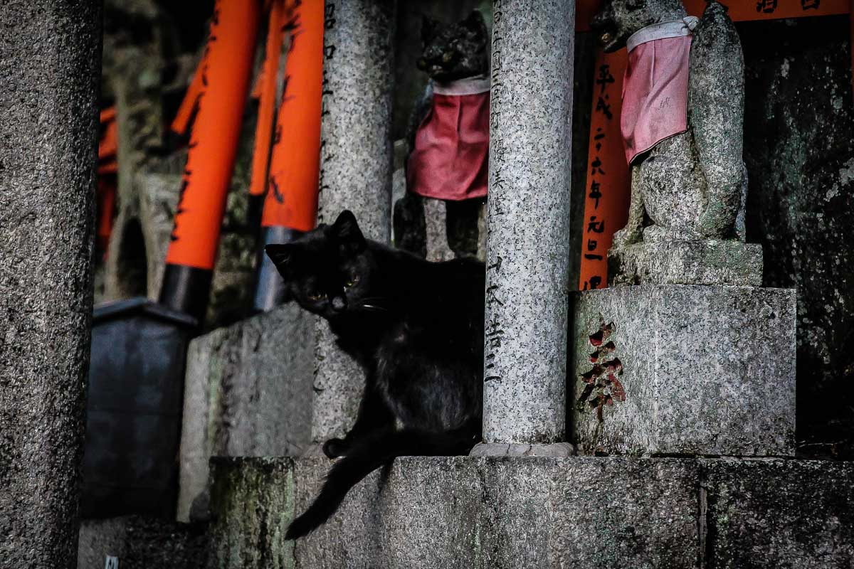 black cat in japanese structure japanese cat names