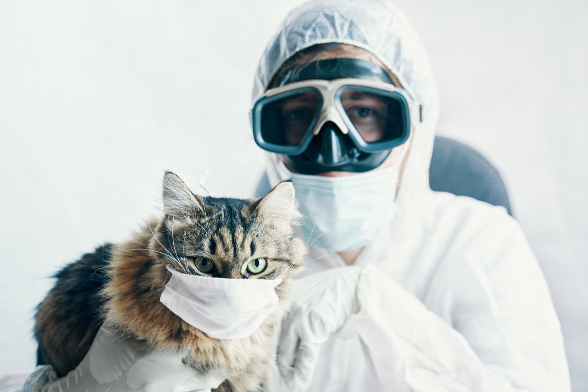 cat and man in masks