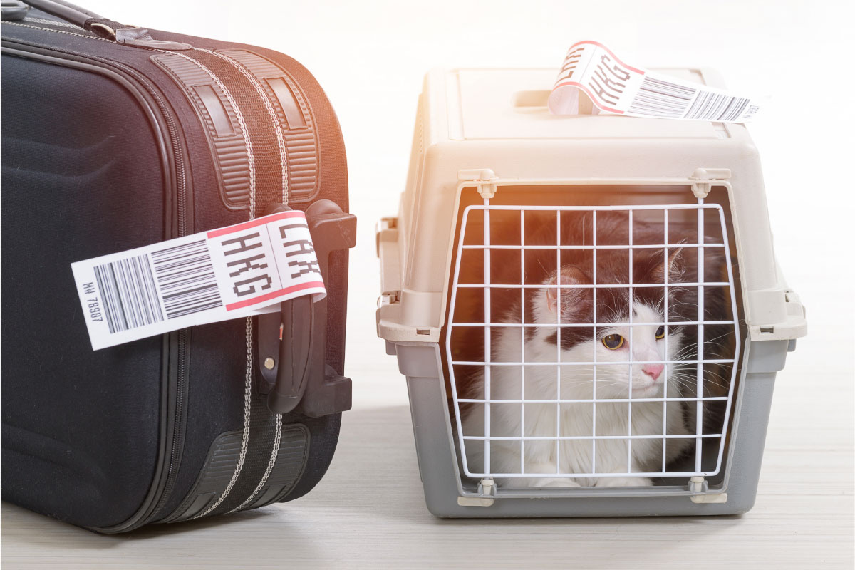 best cat carrier for car travel with suitcase