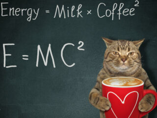 cat with blackboard emc2