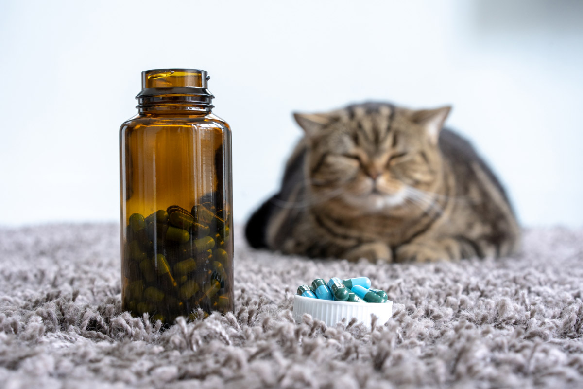 cat with pills and bottle
