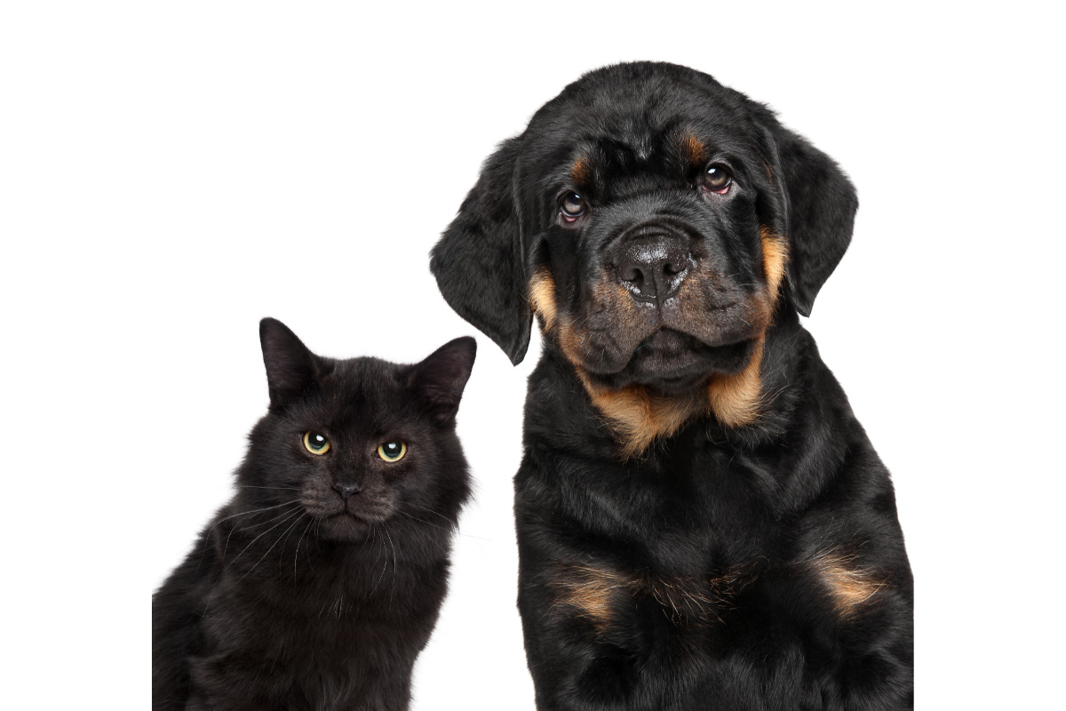rottweiller dog with black cat
