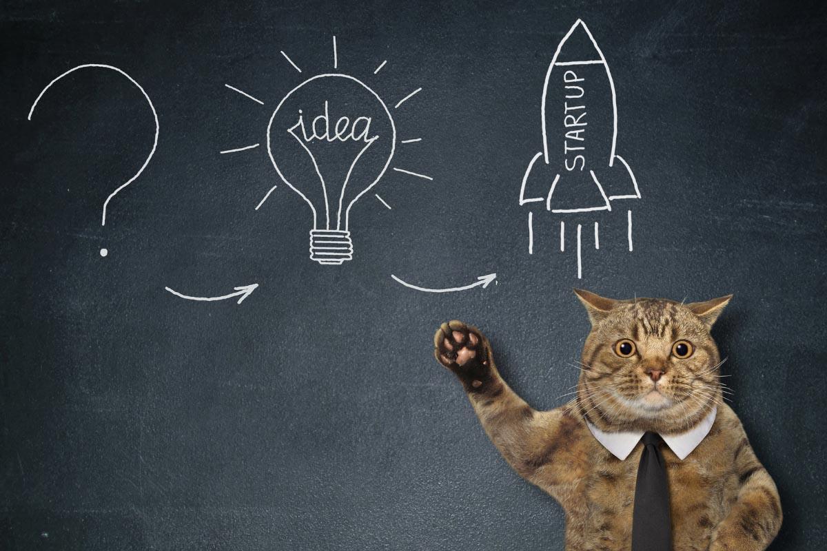 smart cat at blackboard