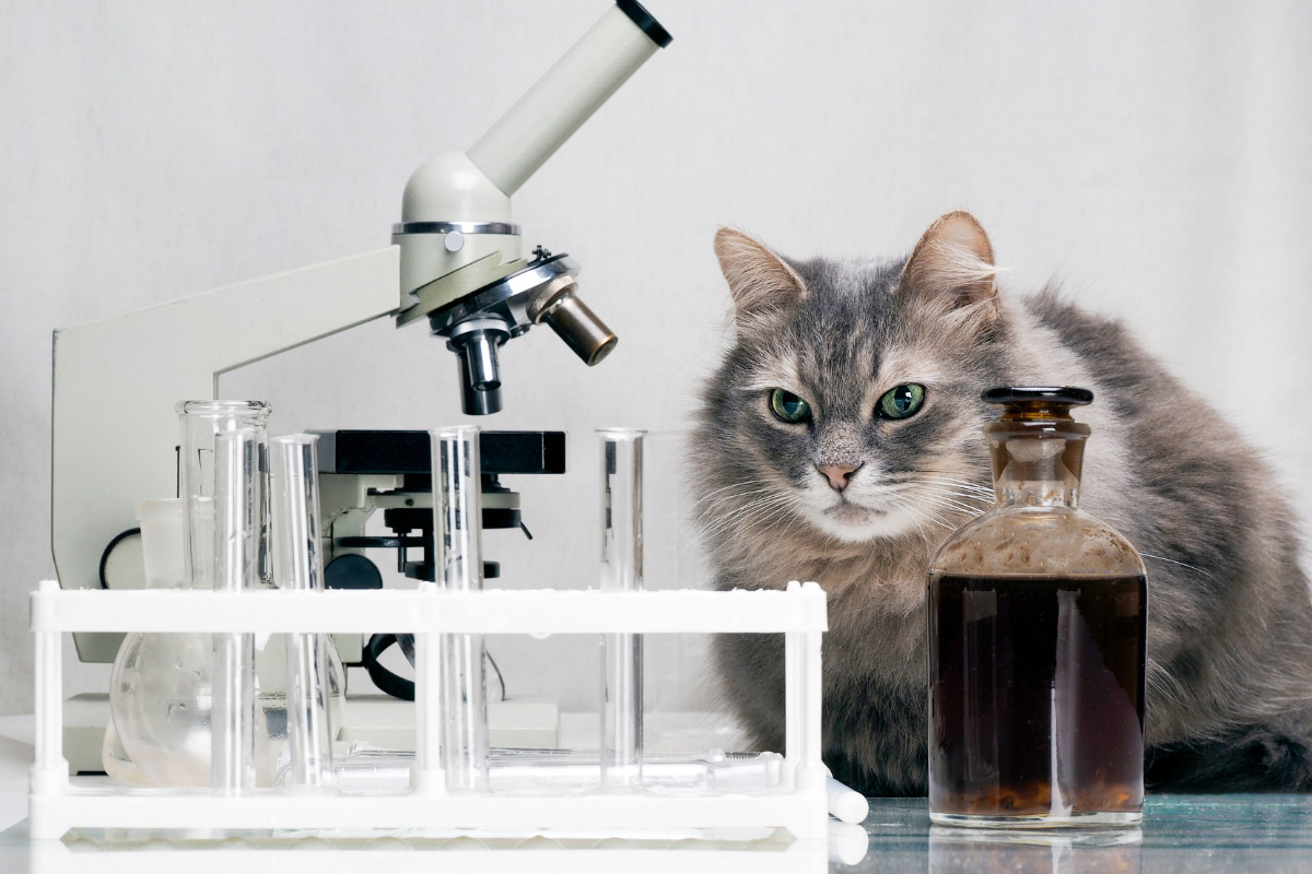 tabby cat in a lab scientist cat names