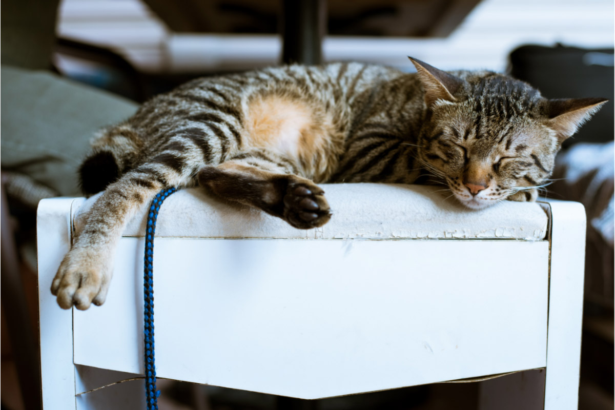 tabby cat rubbing up on white stool