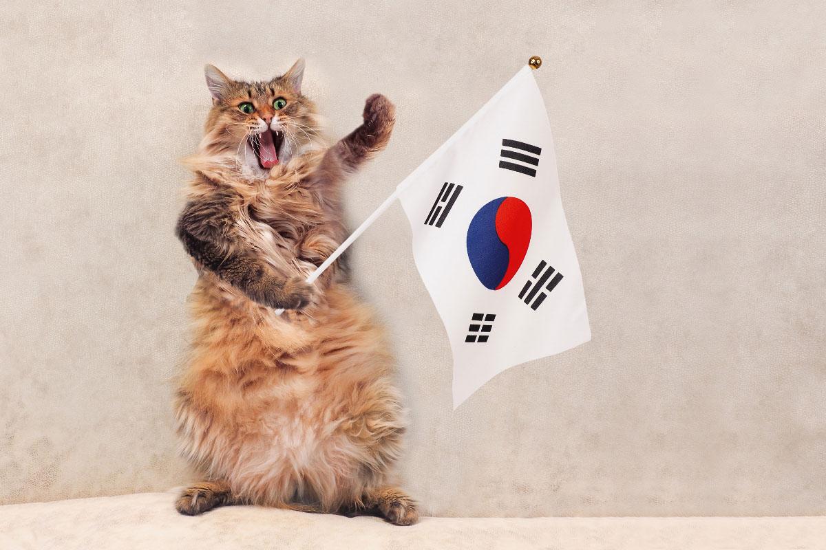 tabby long haired cat with korean flag korean cat names