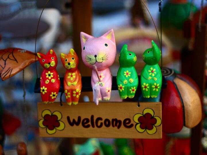13 Cute Korean Cat Names You'll Love