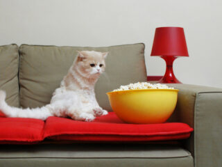 white cat on couch with popcorn