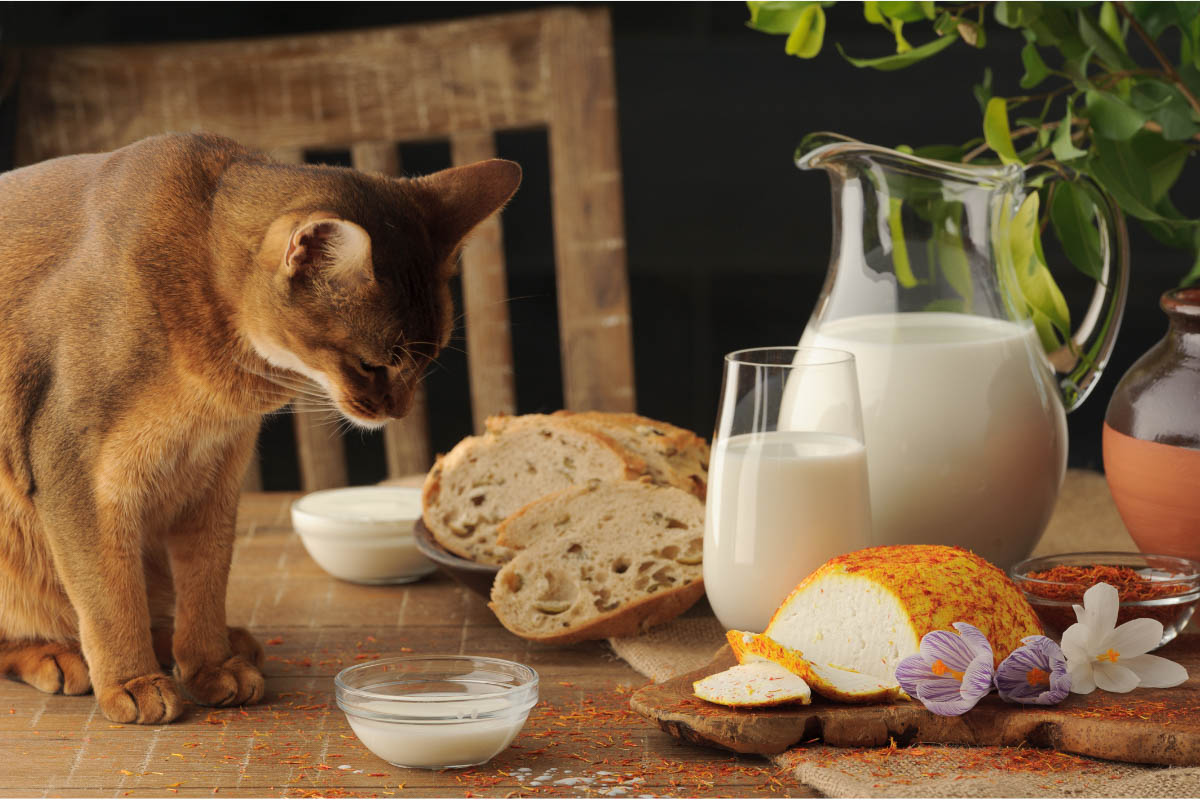 ginger cat looking at dairy products