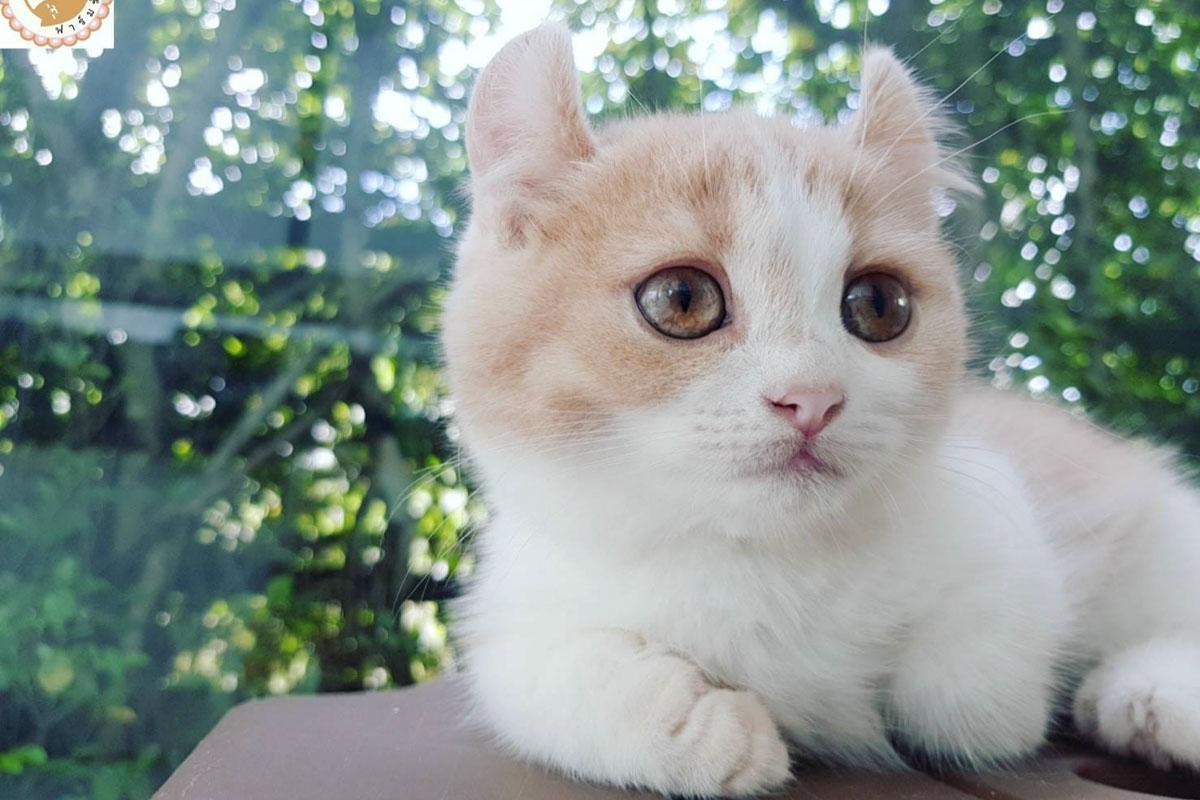 ginger kinkalow