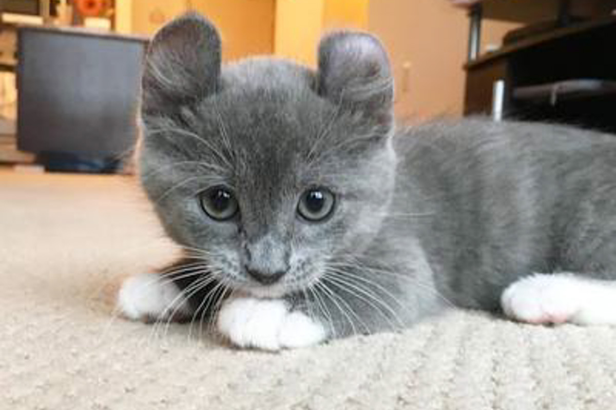 grey kinkalow