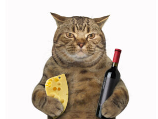 tabby cat with wine and can cats eat cheese
