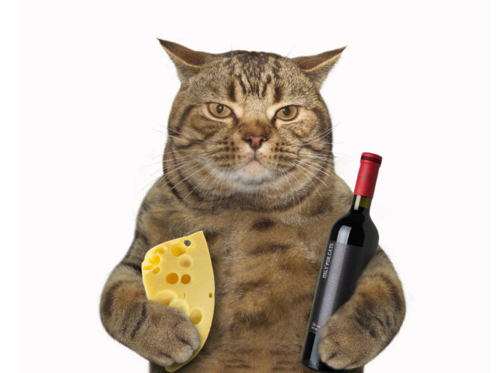 Can Cats Eat Cheese? 6 Things Cat Owners Need to Know