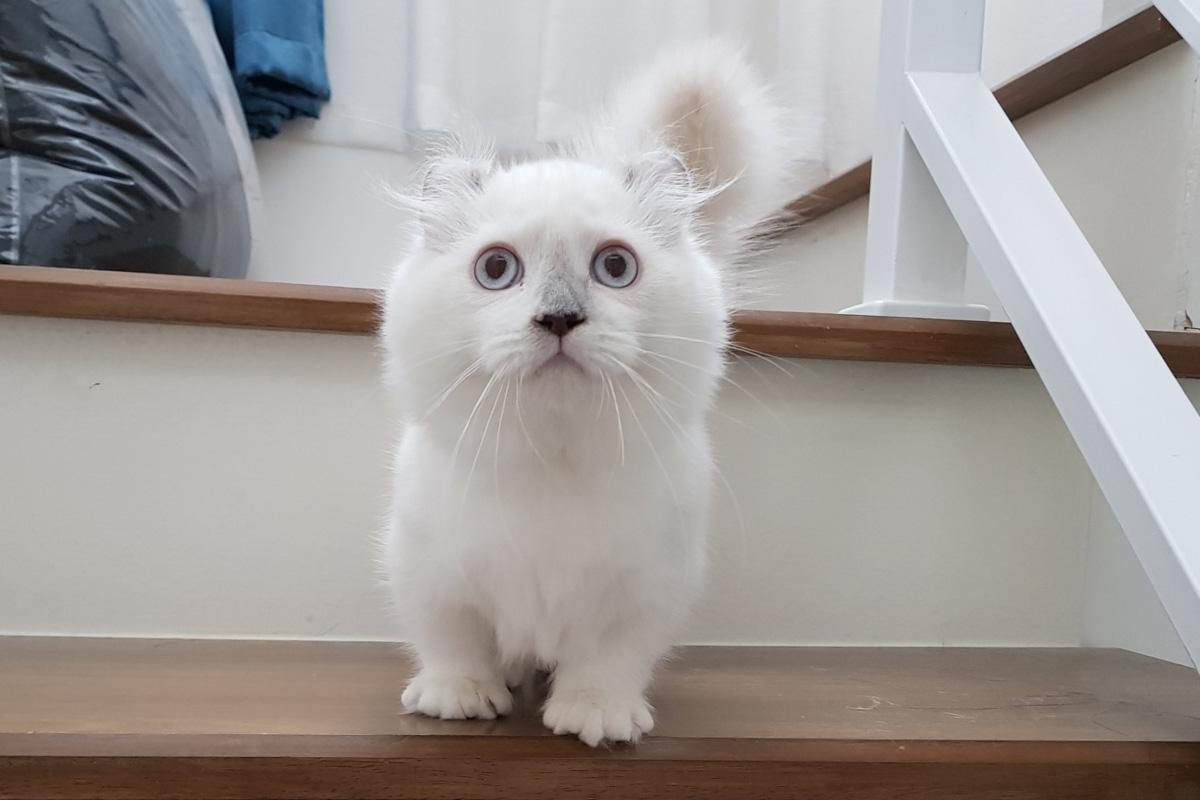 white kinkalow on stairs