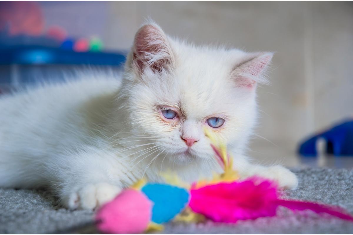 white napoleon with colourful toys