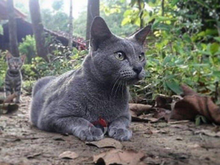 Raas Cat: 13 Things You Need To Know