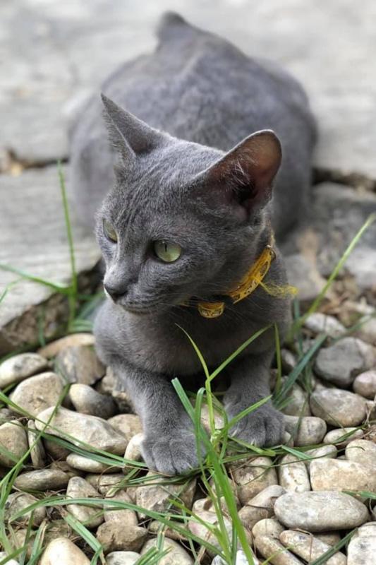 raas cat on pebbles