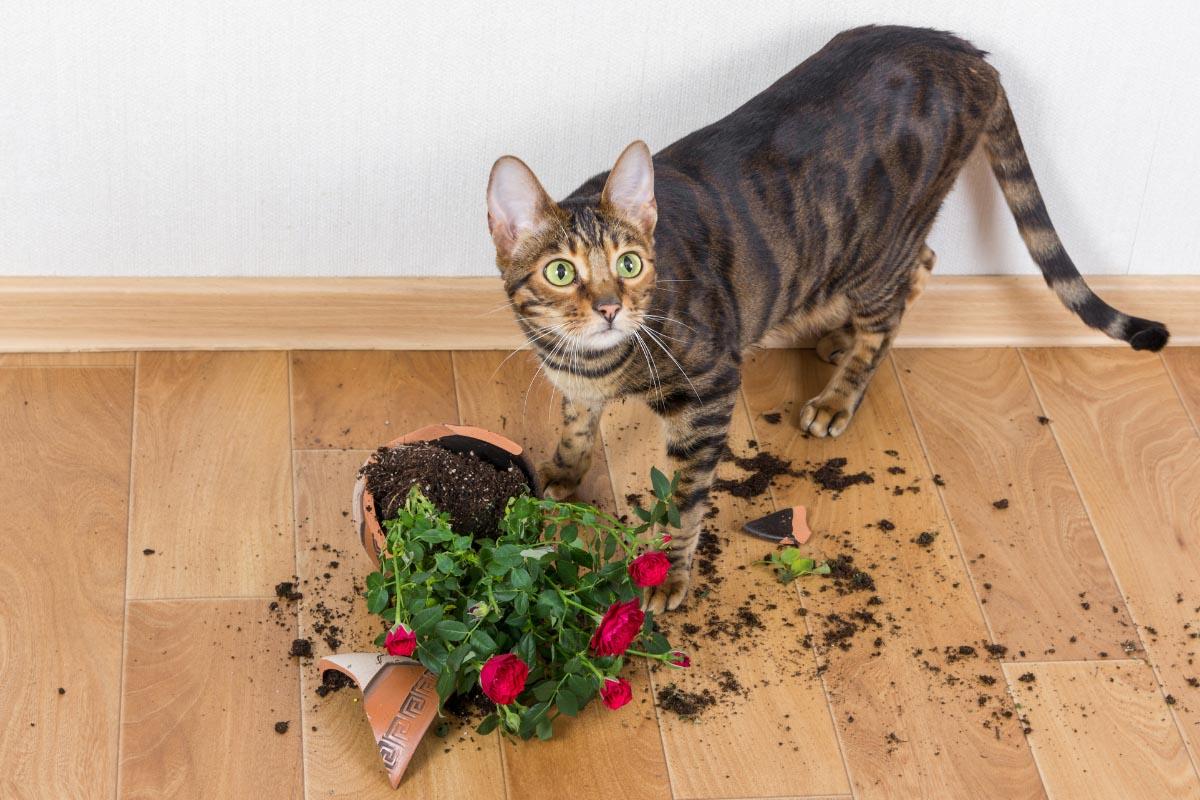toyger cat with spilt plant