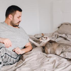 cat scratches man in bed