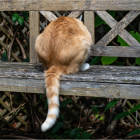 ginger cat on a bench from behind